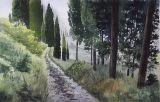 Toskanska  cypresser / Tuscan cypresses