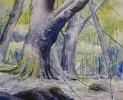 Skogsmotiv - Forest Scenes