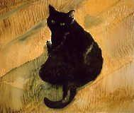 Katt i motljus